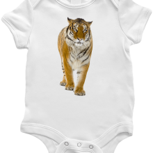 Tigris body